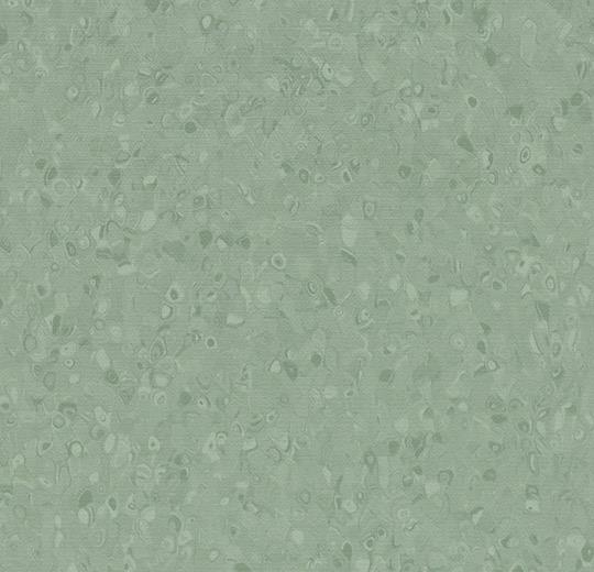 50050 Olive